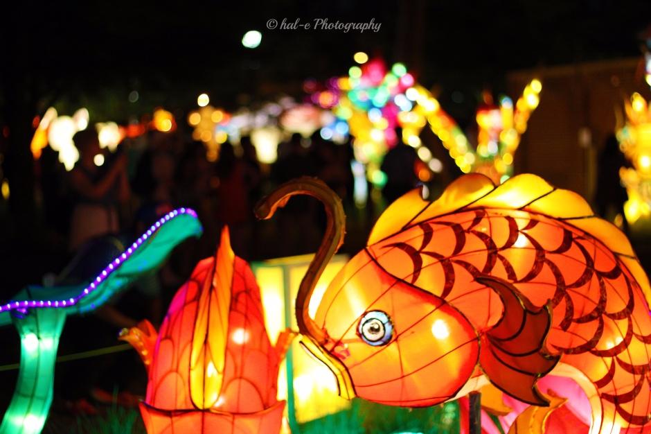 CLF-Asian Fish-J (2)