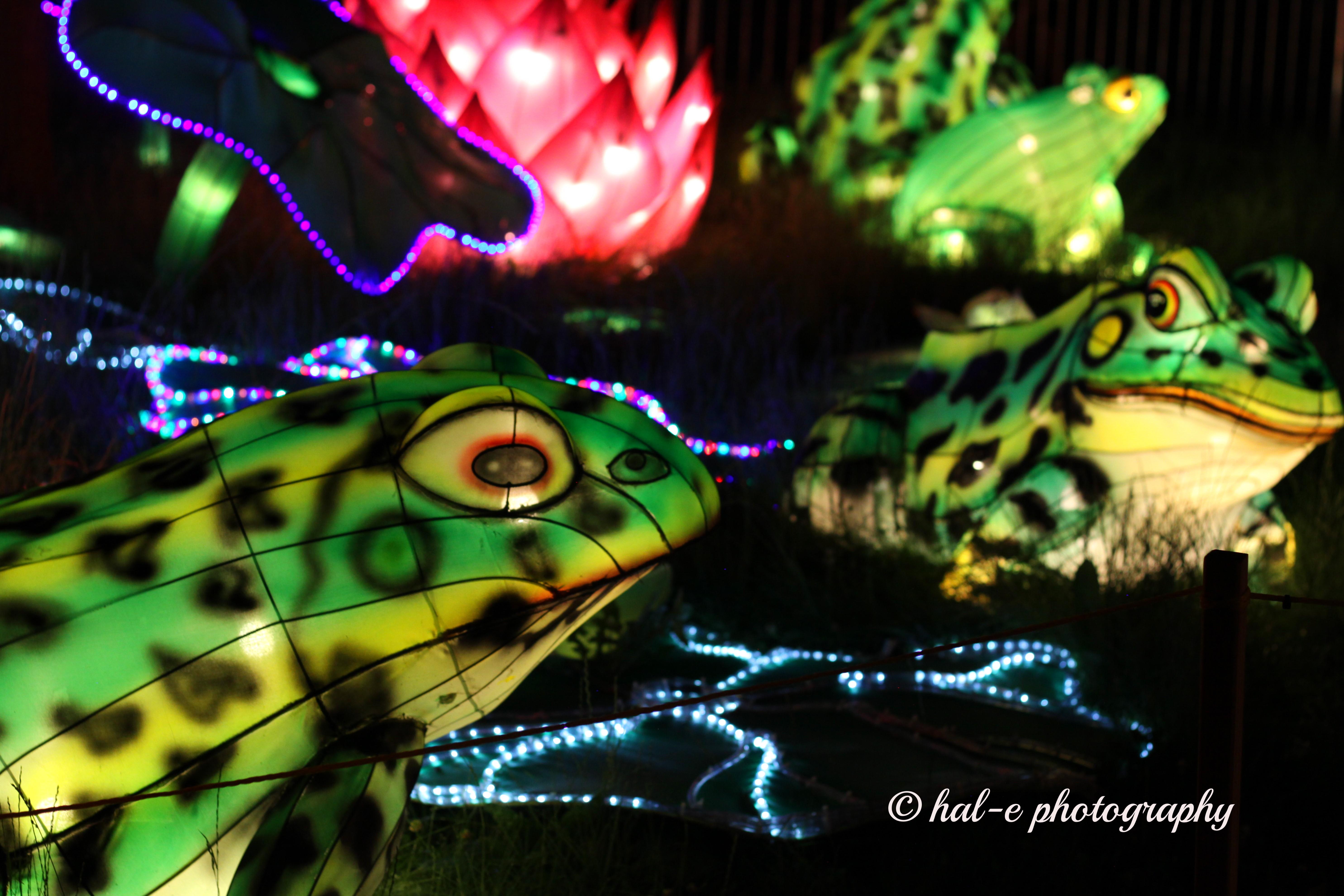 CLF-Frogs-Ja