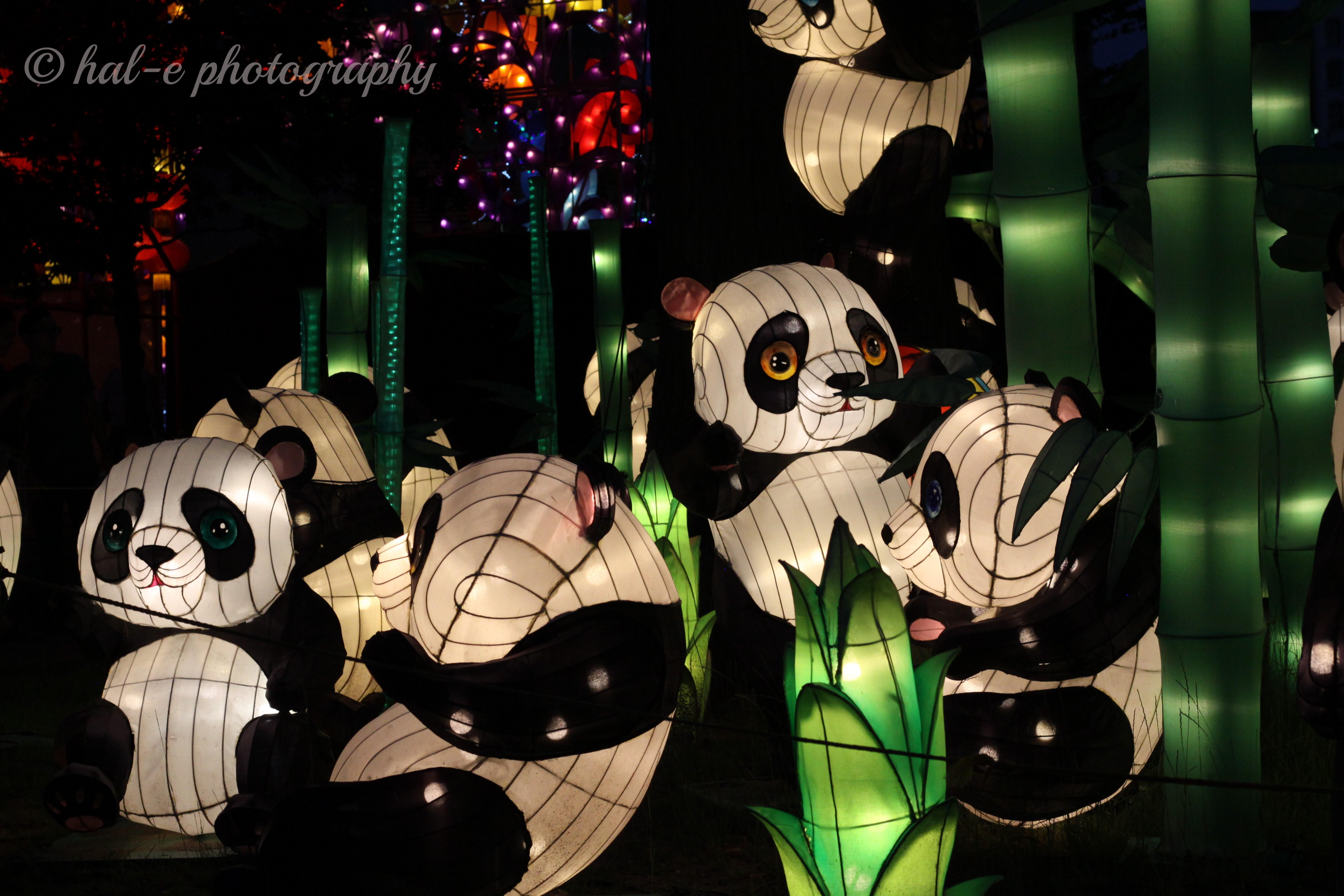 CLF-Panda-J